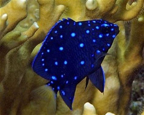 27876 Blue Light Blue Gray Greeb Yellow Leisure Stripe M L Xl Top species of the seven seas 10 beautiful fish of the