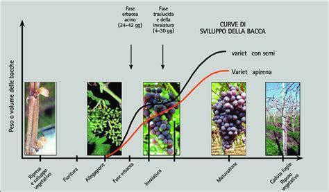 vite uva da tavola figura 9 5 fasi fenologiche della vite ad uva da tavola e