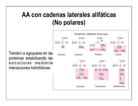 aminoacidos con cadenas alifaticas 5 aa y prote 237 nas