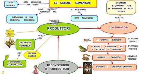 catena alimentare mare mappa concettuale catene alimentari