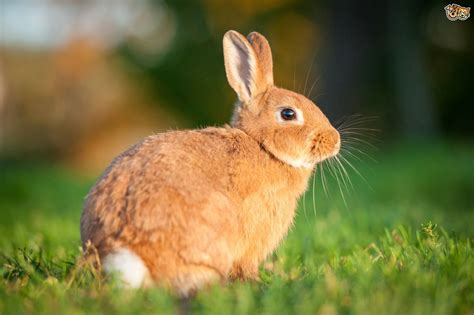 7 Facts On Bunny Rabbits by Rabbit Basics Ten Facts All Potential Owners Should Be