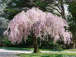 arbres jardin du thabor rennes 192 lire