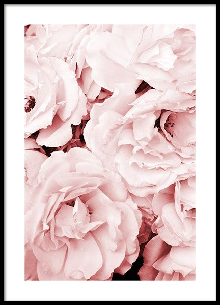 desenho de botanik poster poster mit blumen und pflanzen desenio