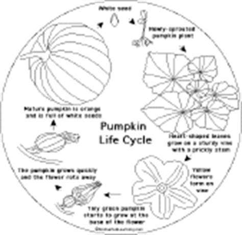 life cycle of a pumpkin coloring page pumpkin shape book printouts enchantedlearning com
