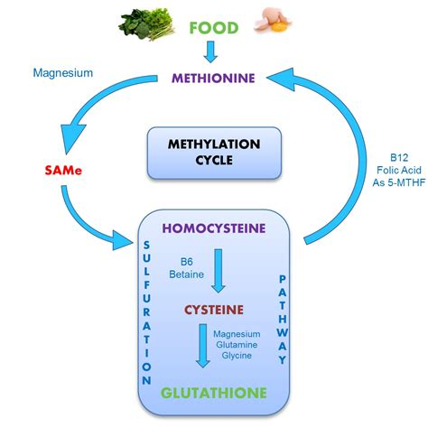 Liver Detox And Methylation by 12 Steps To Optimize Your Methylation Process