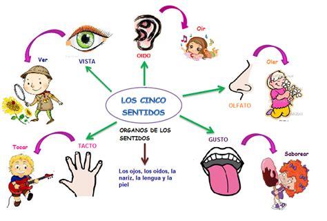 imagenes organos sensoriales image gallery los sentidos