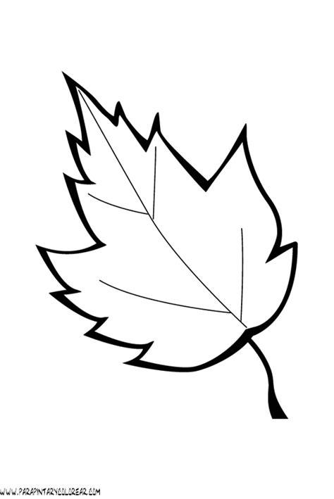 imagenes para colorear hojas hojas de arboles imagui