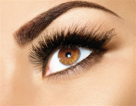 humans  eyebrows  eyelashes vitality