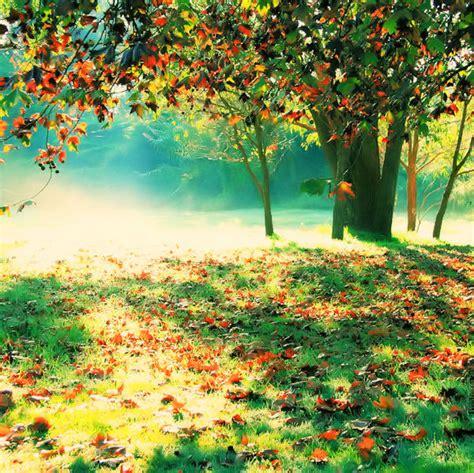 nature colors beautiful color fall light nature image 47144