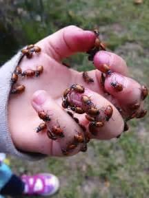 ladybugs swarming my house images