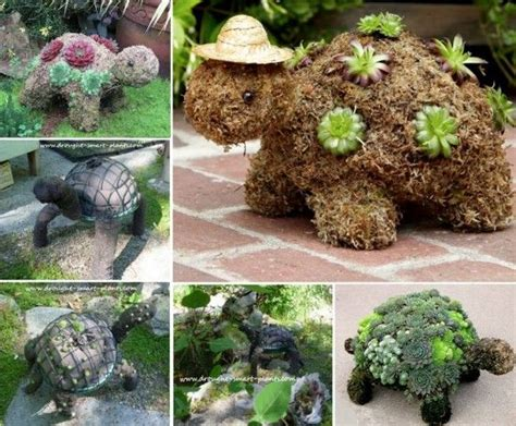 turtle succulent planter succulent turtle planter topiary will look cute in your