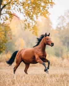 best 25 horses ideas on pinterest pretty horses horse