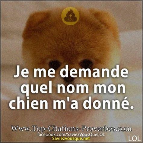 best chion lol blague chien archives top citations proverbes