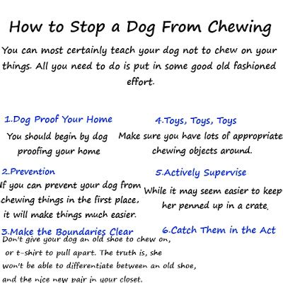 how to get puppy to stop biting you how to get dogs to stop in the house 28 images ways to stop dogs from digging