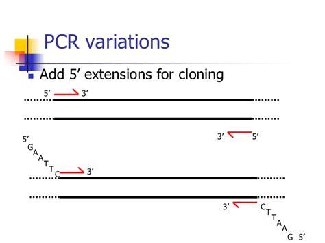 pcr template amount images templates design ideas