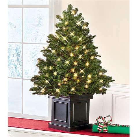 Tabletop Tree With Lights The World S Best Tabletop Prelit Fraser Fir Hammacher