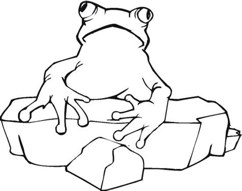 frog and rock coloring page color book