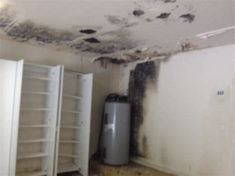 Drywall In Garage Code by Mold Removal In Garage Miami General Contractor