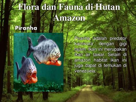 amazon adalah hutan amazon amerika dan hutan kalimantan indonesia