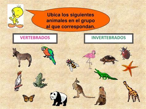 imagenes de animales vertebrados e invertebrados vertebrados e invertebrados