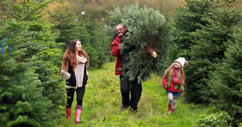 where can you buy a real christmas tree in palm coast where can you buy a real tree in and around newcastle this year chronicle live