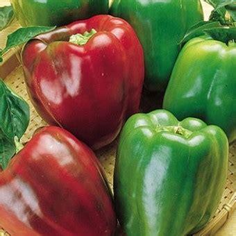 Benih Cabe Pimenta Morango Pepper Isi 5 Biji benih paprika california pepper