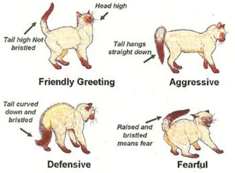 cat tail wagging