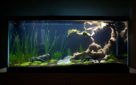 Aquascape Tank For Sale by Exosket S 30 Gallon Journal Aquascaping World Forum