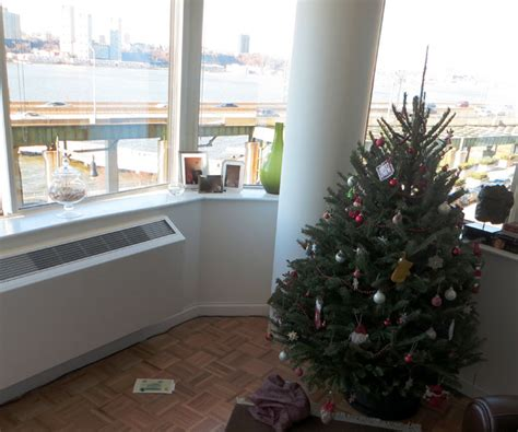 live christmas tree alert aphids enter apartment on