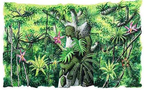 imagenes de animales y plantas de la selva selva tropical p 225 gina 2 monografias com