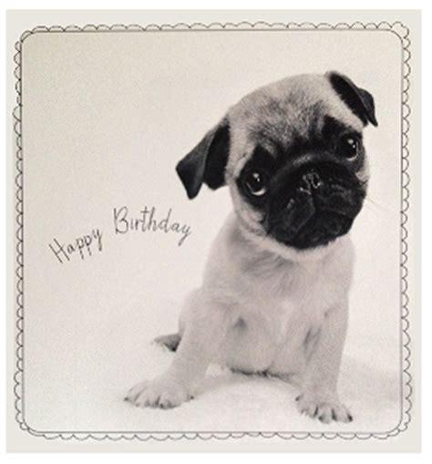 black pug birthday card black white pug birthday card i pugs