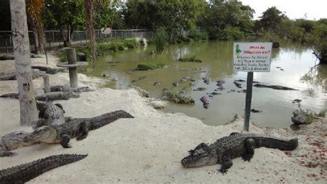 airboat louisiana sw tours everglades alligator farm picture of everglades