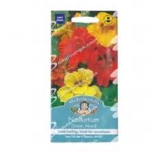 Benih Bunga Mawar Purple Ungu Langka Isi 30 Butir Free jual benih terong yumi f1 400 biji harga murah panah merah