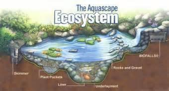 frontier ponds aquascape ecosystems