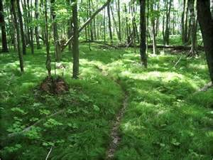 Forest L by Earthworm Invaders Alter Northern Forests Earth Earthsky