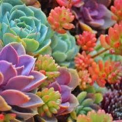 colorful succulents colorful cactus