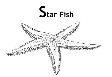 sea star coloring page coloring pages