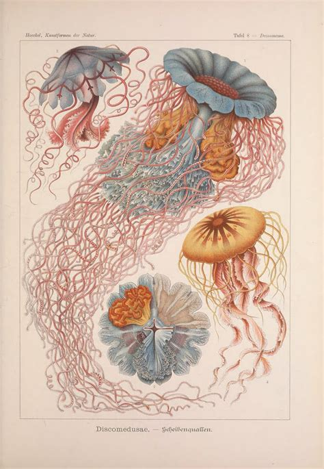biography as an art form biodiversity heritage library world oceans day ernst