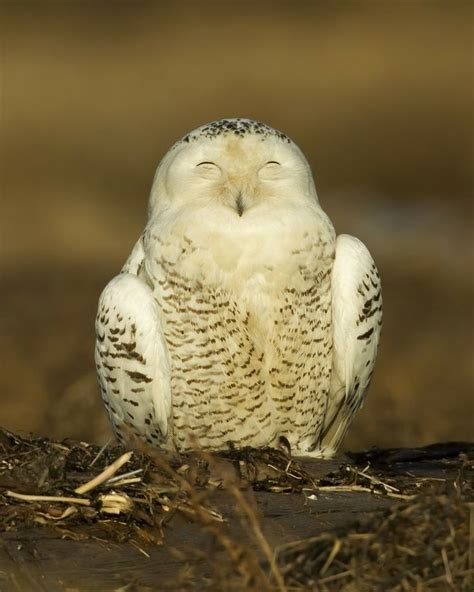 Happy Owl Top 17 best images about birdies on posts tootsie rolls and stress reliever