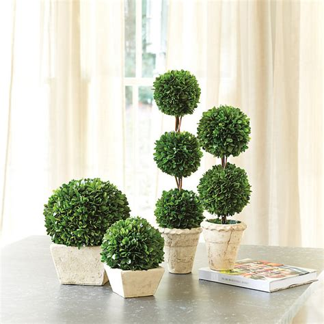 preserved boxwood topiary trees preserved boxwood topiary traditional plants