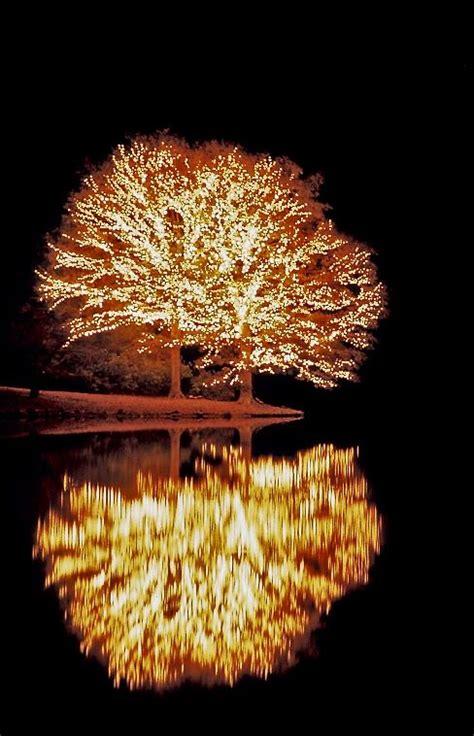 pine mountain ga lights 36 best callaway gardens images on callaway