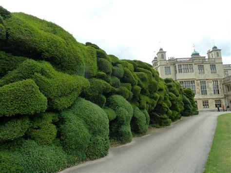 hedge topiary trim cupressocyparis leylandii in a hedge recherche