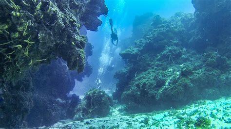 dive cozumel diving cozumel el camino aloha