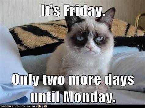 Friday Cat Meme - happy friday from grumpy cat cats funny