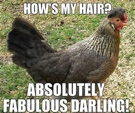 Funny Chicken Memes - pinterest the world s catalog of ideas