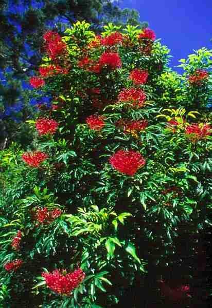 tanaman tumbuhan langka indonesia  terancam punah