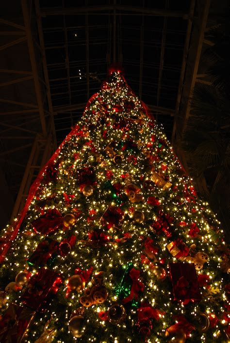 how to make a big christmas tree tree inside dores vanderbilt