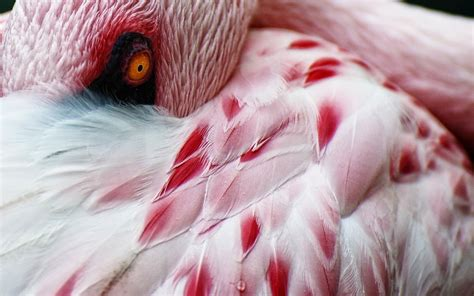 flamingo heaven wallpaper animals flamingos on pinterest