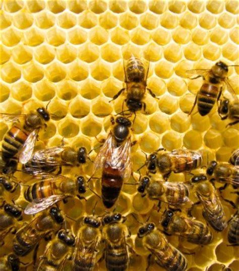 Sociedade das Abelhas - InfoEscola