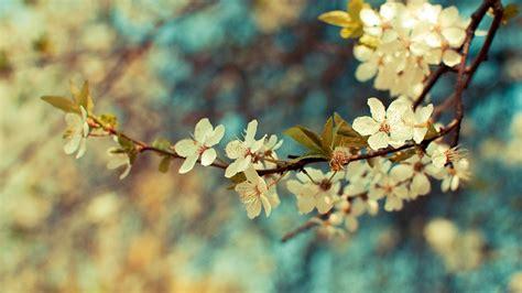 wallpaper flower vintage hd vintage flower background hd wallpaper of vintage